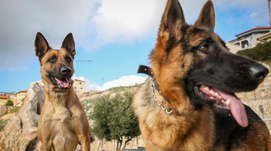 Israeli dogs detect cancer