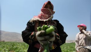 "Palestinians: ""We Discovered Agriculture!"""