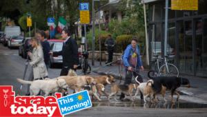 Walking the dog was nice. But finding parking in Tel Aviv isn't.