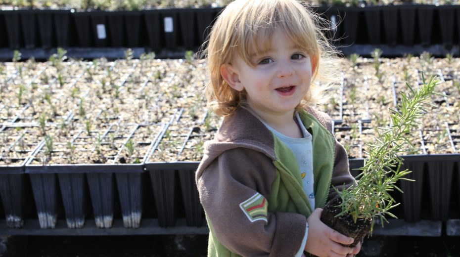 Tu B'shvat and the culture of planting trees in Israel.