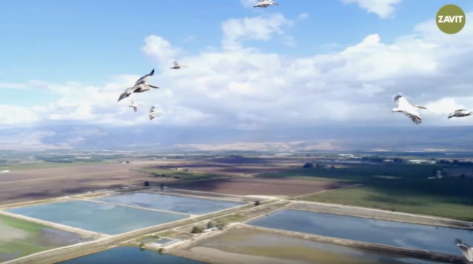 The Hula Valley in the north of Israel is a paradise for bird watchers.