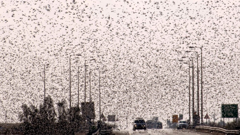 Iran hit by plague of biblical proportions.