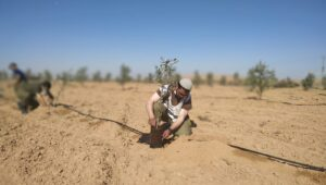 Israeli soldiers plan olive trees donated by loving Christians.