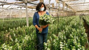 Flowers from Israel are in high demand in Europe