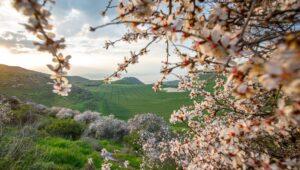 Tu Bishvat celebrates the planting of trees