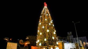 A Christmas tree in Israel. Flash90