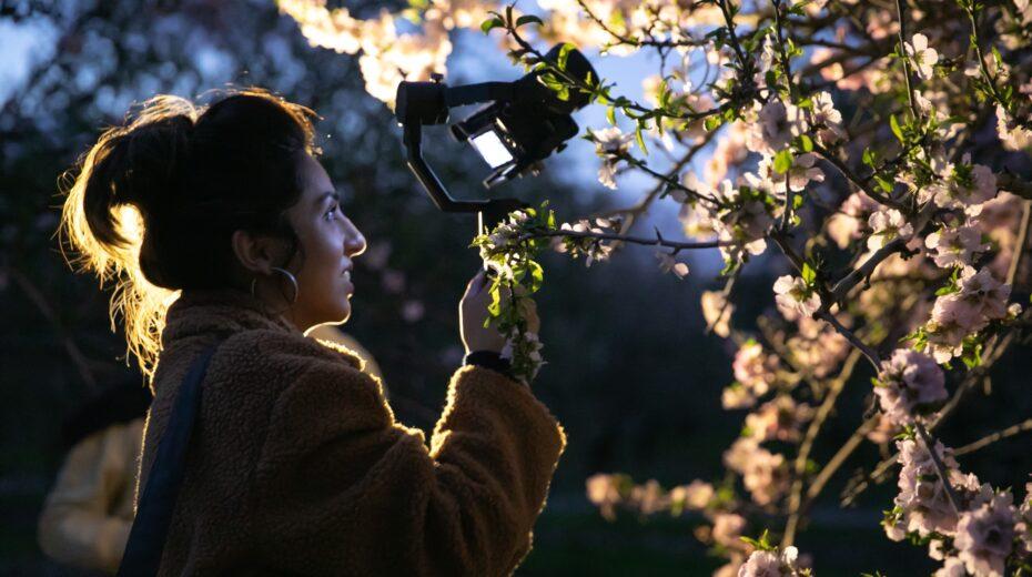 Almond tree blooms in Israel