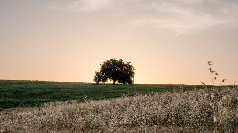 Trees play an important role in the Bible