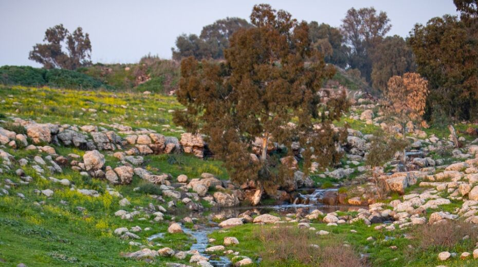 Golan Heights in Spring
