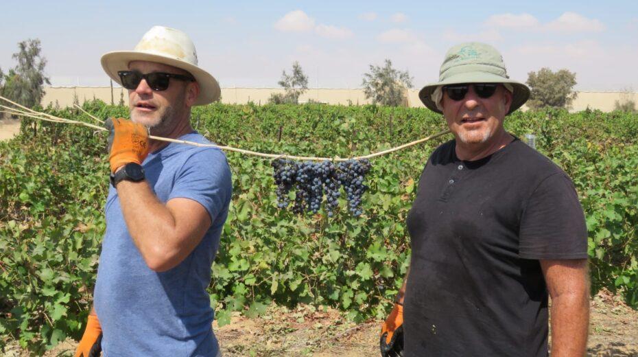 At the Israel Today vineyard