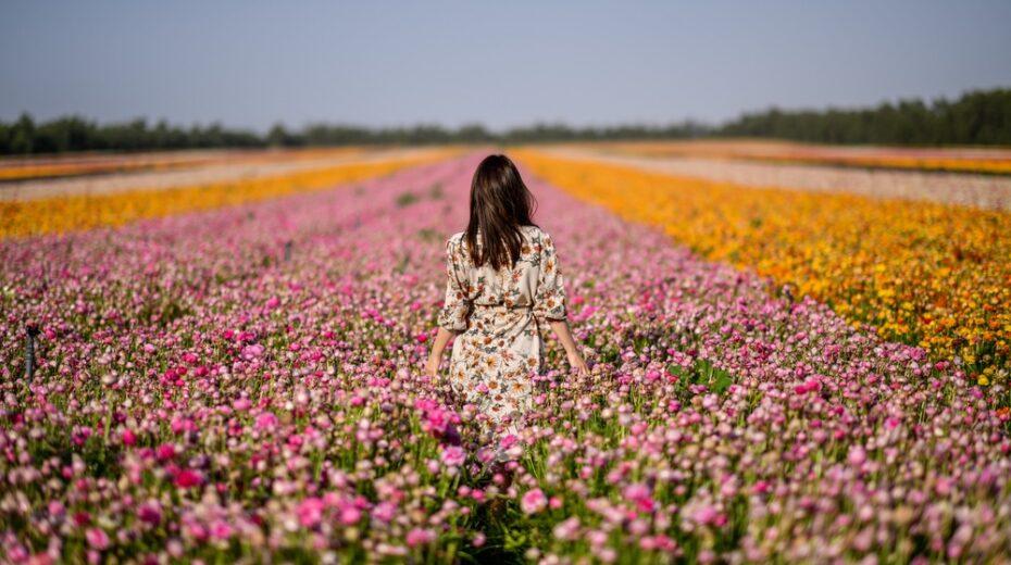 Flowers in Israel