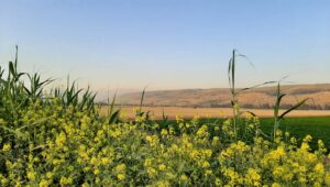 Adventure in the Galilee