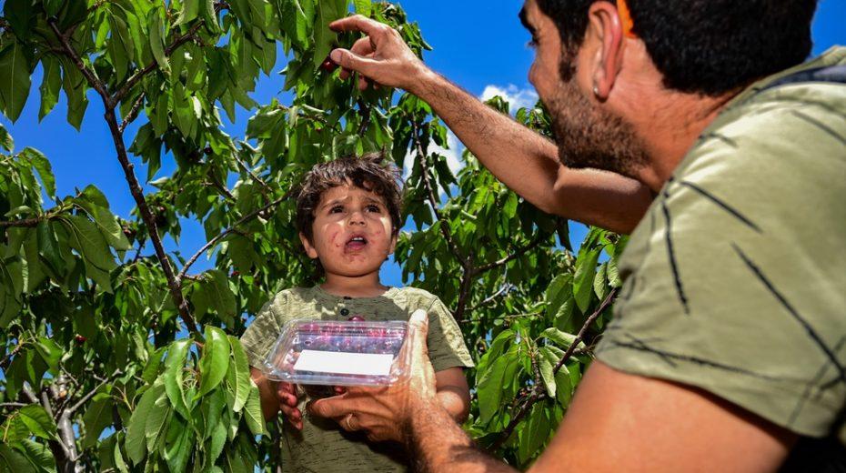 Israelis love their local fruit