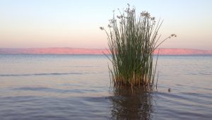 The Sea of Galilee has never been so full, or so lonely.