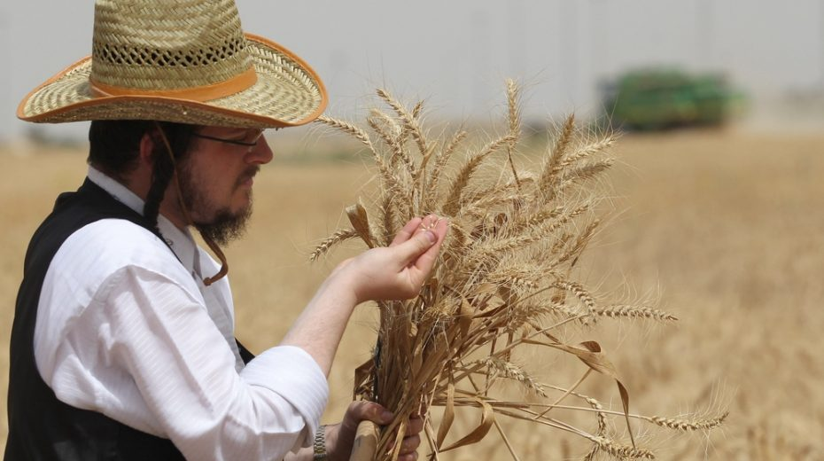 Does a dwindling world food supply mark the coming of Messiah?