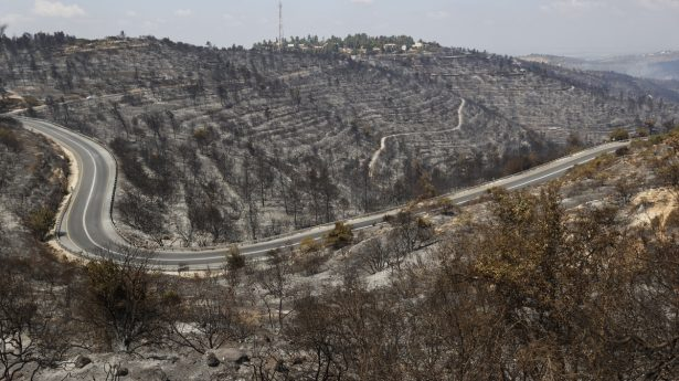 The morning after. Charred hillsides to the west of Jerusalem.